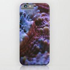 Acanthastrea Echinata Macro iPhone 6 Slim Case