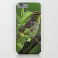 Palm Warbler iPhone 6 Slim Case