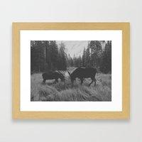 Moose Battle Framed Art Print