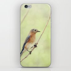 Perched On A Frail Branch iPhone & iPod Skin