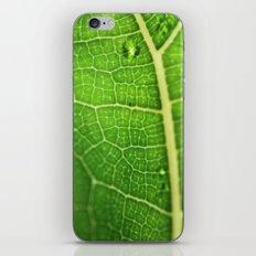 Fiddle Leaf Ficus Tree iPhone & iPod Skin