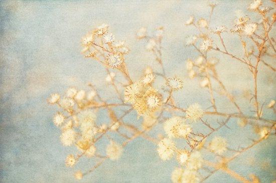 Winter Weeds Art Print