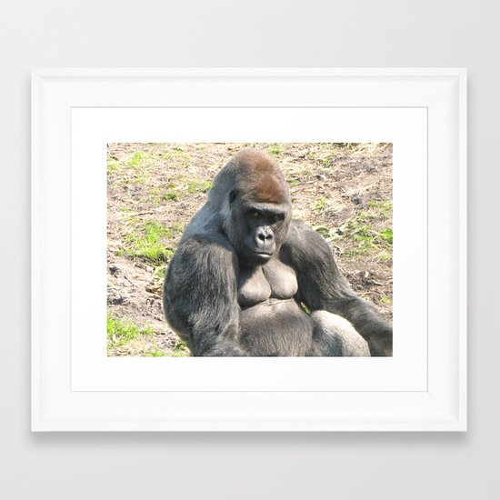 Lowland Gorilla Framed Art Print