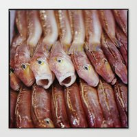 Lined Fish Canvas Print