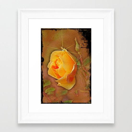 Peach rose Framed Art Print