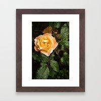 Rose 1 Framed Art Print