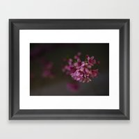 Kyoto Night Sakura, Japan 2015 Framed Art Print