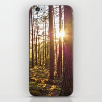 Evening In The Forest iPhone & iPod Skin