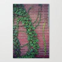 Brick Wall Ivy Canvas Print