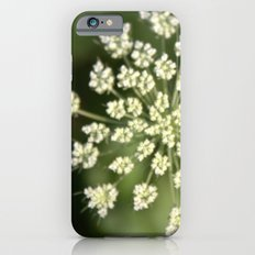 queen lace flowering head. floral garden plant photography. iPhone 6s Slim Case
