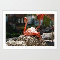Sitting Flamingo Art Print