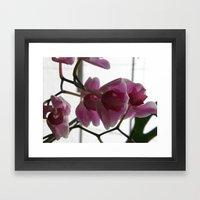 Orchids #1 Framed Art Print