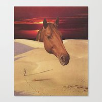 equestrian dawn Canvas Print