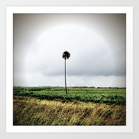 I'm a lonely palm Art Print