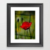 Poppy And Fence Framed Art Print