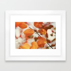 The Color of Autumn Framed Art Print
