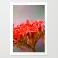Just Lovely Art Print