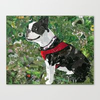 Mugsy The Boston Terrier Canvas Print