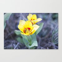 Early Bloom Canvas Print