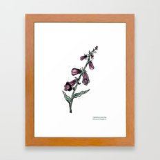 Digitalis purpurea Framed Art Print