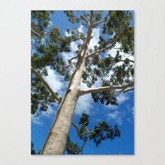 Gumtree Canvas Print