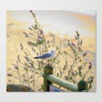 Resting Seagull Canvas Print