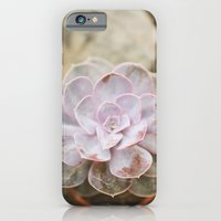 iPhone & iPod Case featuring SOLO SUCCULENT  by Megan Robinson