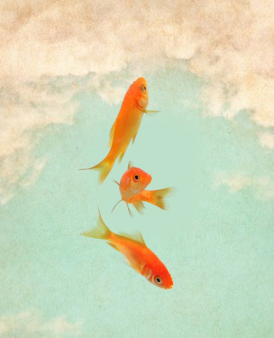 Goldfish in the sky Canvas Print