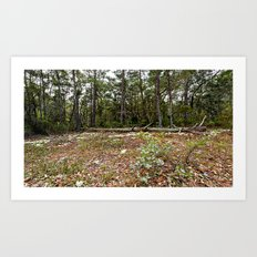 forest in florida Art Print
