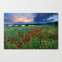 Spring poppies. Sunset at the lake. Canvas Print