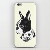 Dog - Tattooed BostonTerrier iPhone & iPod Skin