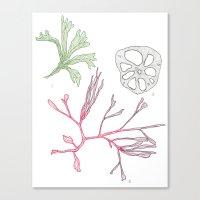 Seaweed and Lotus Root Canvas Print