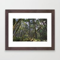 Nature's Claw Framed Art Print