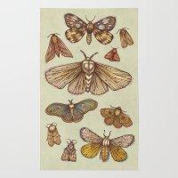 Moths Rug