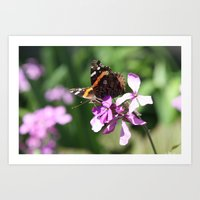 Butterfly And Phlox Art Print