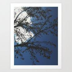 spring in sacramento Art Print
