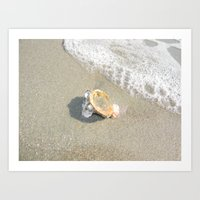 Washed Up Seashell. Art Print