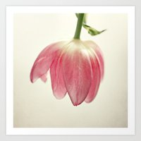 the tulip Art Print
