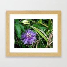 Passion vine flower Framed Art Print