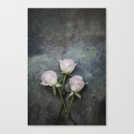 Three Roses I Canvas Print