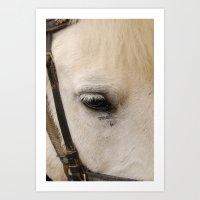 Face of a Horse Art Print