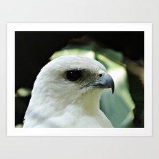 White eagle Art Print