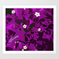 Bouganvilla delight Art Print