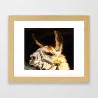 Llama Llove Framed Art Print