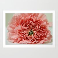 Phi Pin And Carnation Art Print