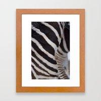 Zebra 02 Framed Art Print