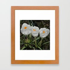 Three Little White Flowers Framed Art Print