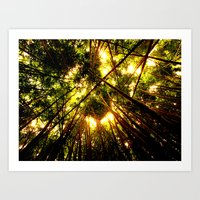 Bamboo Forest Art Print