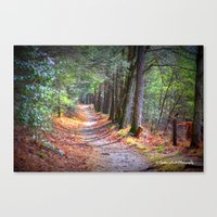 Secret Pathway Canvas Print