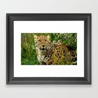 AMUR 02 Framed Art Print